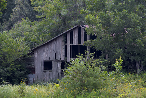 Old barn surrounded by weeds