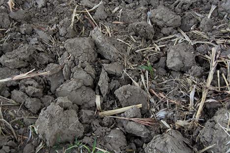 Delta gumbo soil clods