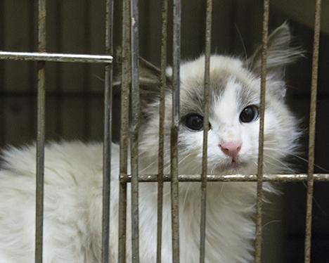 Elizabeth in cage