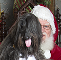Santa and Afghan Hound