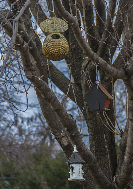 Three birdhouse tree