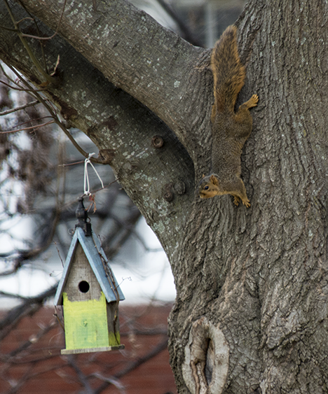 Squirrel and birdhouse in tree