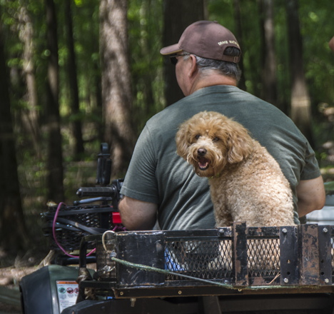 Dog riding on four wheeler