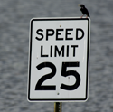 Bird on sign in flood