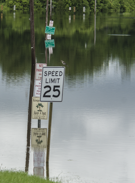 signs in flooded park with bird