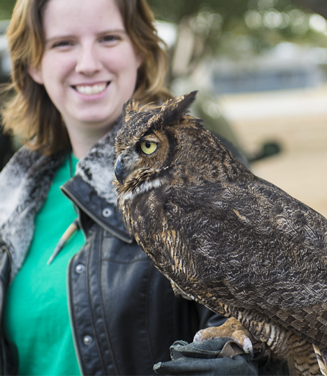 Handler and captive great horned owl