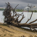 dead tree washed up on riverbank