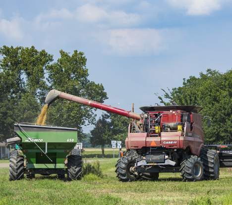 Combine emptying freshly harvested soy beans from a combine to a grain cart